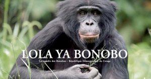 Kanopé RH soutient lola ya bonobo